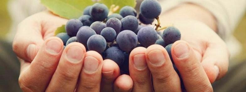 il ciclo della vite the cicle of the vine copertina-min