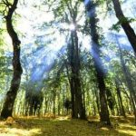Umbra Forest: Unesco inserts beech wood in the World Heritage Site