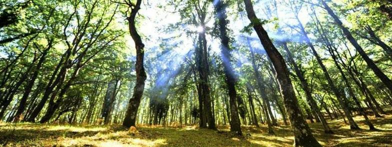 Foresta Umbra: Unesco inserisce faggete nel Patrimonio Mondiale Umanità