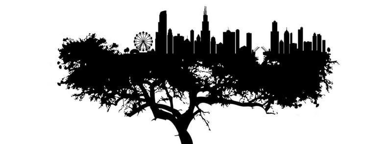 mettete degli alberi nei vostri programmi put trees in your programs copertina