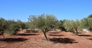 olio extra vergine di oliva scaffale-min