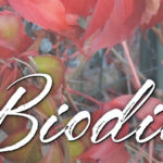 Biodiversity, arts and crafts show in Ceglie Messapica (Brindisi, Puglia). On October 27th and 28th at the ISA Bottega.