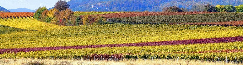 SUOLO E VIGNETO - SOIL AND VINEYARD